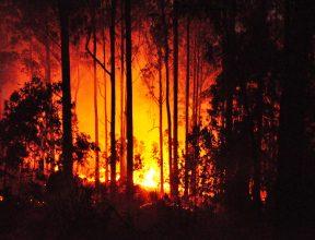 В Калифорнии горят виноградники в долине Napa Valley. ВИДЕО