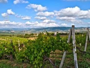 Кабмин РФ с учетом замечаний поддержал проект о нормах развития виноградства и виноделия