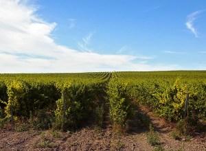 Агрофирма «Южная» приобрела имущество ООО «Кубанские вина»