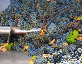 Госдума приняла в первом чтении законопроект о развитии виноградарства и виноделия в РФ