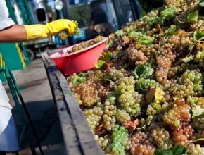 Круглый стол Голицынского фестиваля «Инвестиции в российское виноделие. За и против»