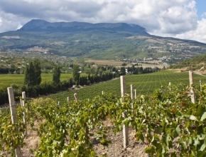Госдума продлила льготы для крымских виноделов