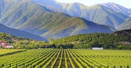 Грузинское вино: 63:10 - Россия вновь обыгрывает Китай с разгромным счетом