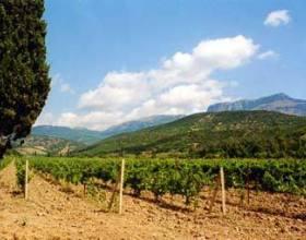 Площадь посадки виноградников в Крыму в 2018 году возрастет в 1,5 раза