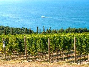 Пятая зона для выпуска вин с защищенным наименованием места происхождения создана на Кубани