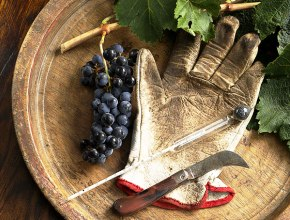 Госдума приняла во II чтении законопроект о производстве вина фермерскими хозяйствами