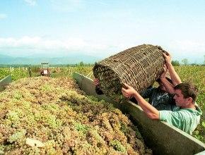Грузия вернулась в тройку крупнейших поставщиков вина в Россию