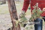 Апрельский Форум виноделов в Анапе. Тур Дружбы. МЫСХАКО. ФОТО