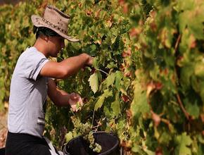 Минфин выступил против дополнительного сбора на импортные вина